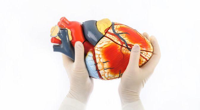 Penyakit Fibrilasi Ventrikel (Nuno Monteiro/Shutterstock)