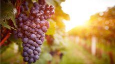 7 Sumber Antioksidan Terbaik untuk Tubuh (Rostislav_Sedlacek/Shutterstock)
