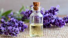 3 Minyak Esensial yang Bisa Bikin Tidur Nyenyak (Madeleine Steinbach/Shutterstock)