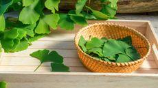 5 Tanaman Obat yang Terbukti Mujarab (jurgal/Shutterstock)