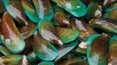 Anda Tidak Disarankan Makan Kerang Hijau dari Teluk Jakarta, Kenapa? (Praisaeng/Shutterstock)